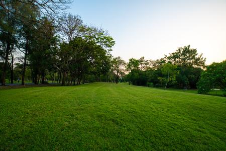 Schönes grünes Feld mit Baum in der Stadtparksonnenunterganglandschaft Standard-Bild