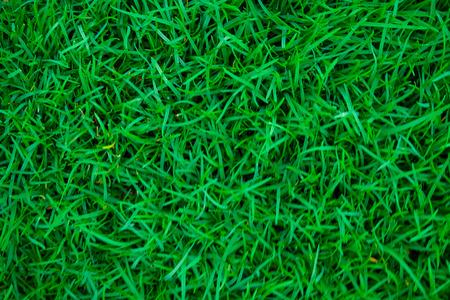 Green nature grass texture ecology background 免版税图像