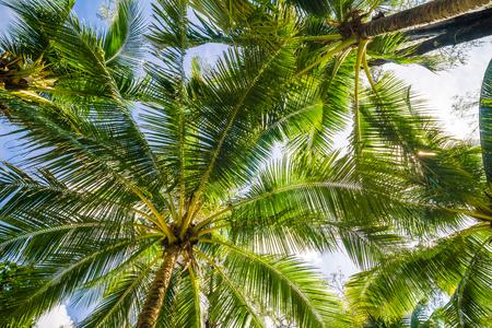 Coconut palm tree blue sky with cloud seascape