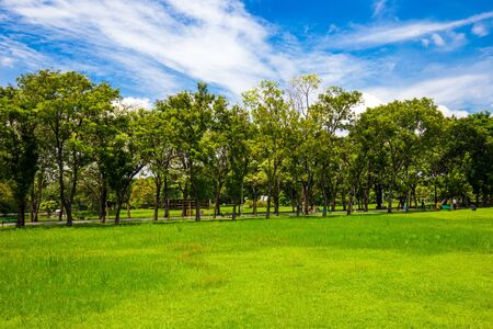 Idyllic nature green meadow with tree in city public park, Nature landscape