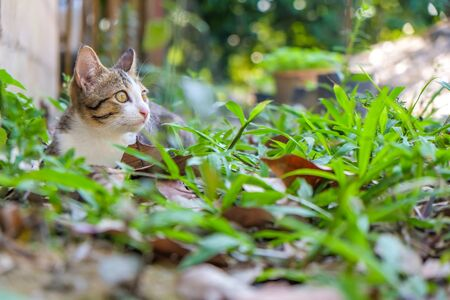 Little cat playing on green park outdoor, Animal concept