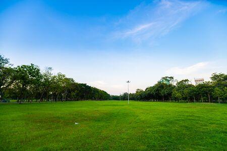 Coucher de soleil d'arbre de silhouette dans le ciel coloré de parc public de ville avec le nuage, paysage de nature Banque d'images