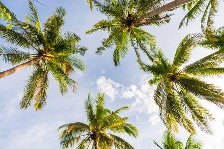Parc de cocotiers avec nuage de ciel coucher de soleil sur l'île, Koh Tao Banque d'images