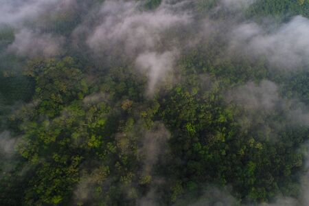 Mountain tropical forest morning with fog aerial view Banco de Imagens - 132097191