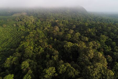 Mountain tropical forest morning with fog aerial view