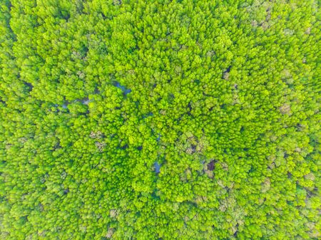 Aerial vire green tropicl mangrove forest nature landscape