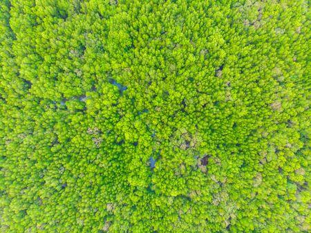 Paysage naturel de la forêt de mangroves tropicales de vire aérienne verte