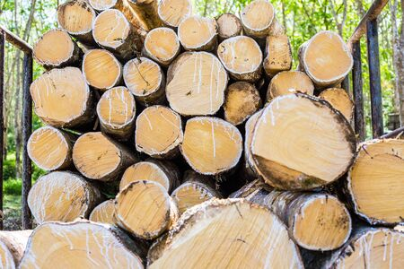 Tree cut lumber industry with truck in forest