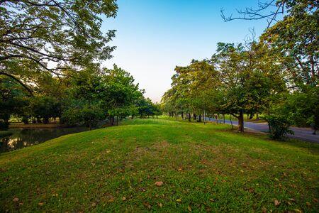Zachód słońca w miejskim parku publicznym kolorowe niebo zielone pole natura krajobraz