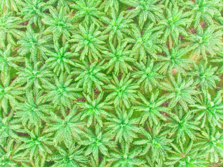 Palm oil plantation field aerial view scene nature industry