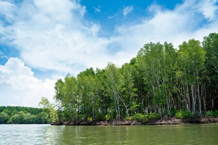 Tropical mangrove forest with river to the sea shore nature environmental