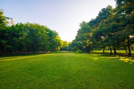 Grüner Rasen des Sonnenuntergangsparks mit öffentlichem Park der Baumstadt Standard-Bild