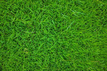 Jardin botanique de texture de nature d'herbe verte, herbe fraîche
