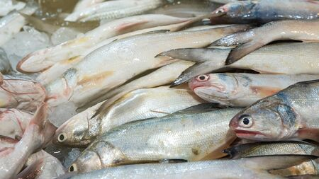 Fresh sea fish sell in local fishery market in Samutprakhan, Thailand Banque d'images
