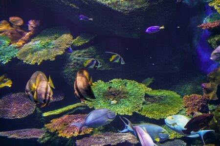 Colorful coral reef and sea fish underwater, Sea life