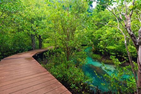 Mangrove junction pathway to the forest, Wooden footpath