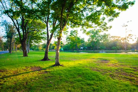 Green tree in city park with meadow grass sundet sky nature landscape Foto de archivo