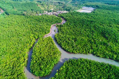 Green mangrove forest sea bay sunrise ecology nature system aerial view
