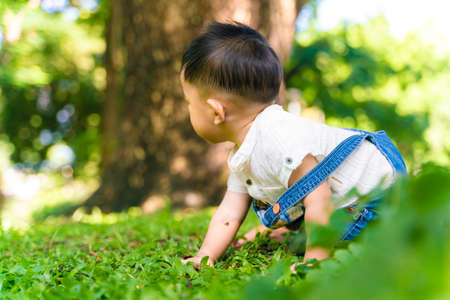 Little 1 year boy crawling on green grass under tree park outdoor Stock Photo
