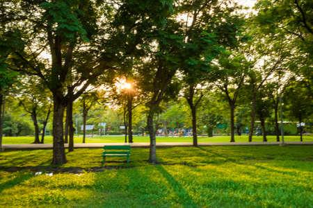 Green grass public park evening sunset recreation place