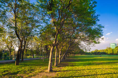 Green tree park sunset foliage meadow with blue sky cloud nature landscape Banque d'images