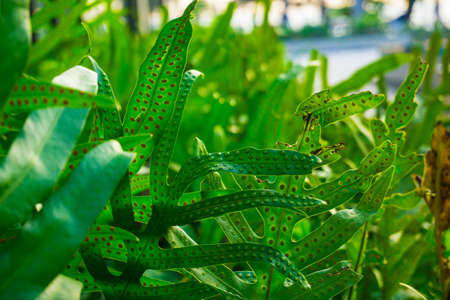 Texture of green fern mos frond plant in garden