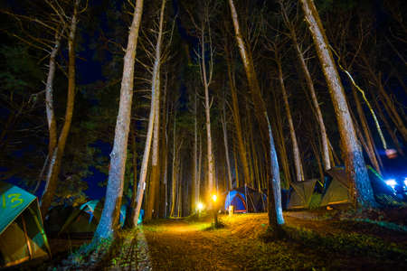 Night camping tent in pine tree forest with light nature recreation