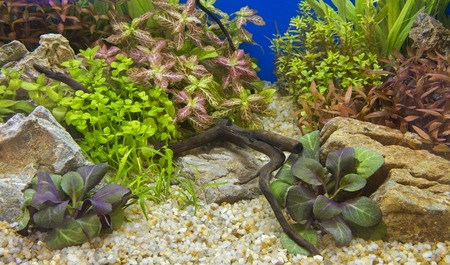A green beautiful planted tropical freshwater aquarium Banco de Imagens