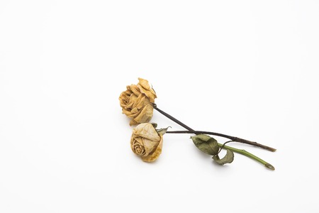 dried roses depicted on a white background. photo