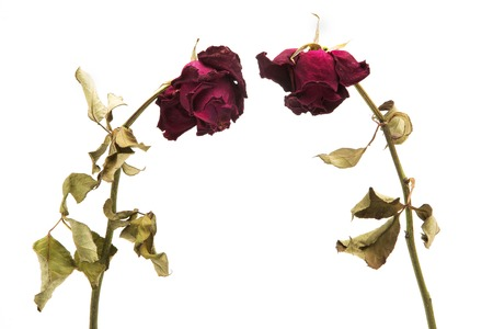 dried roses depicted on a white background.