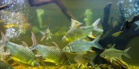 exoticism saltwater fish: Fishes in aquarium