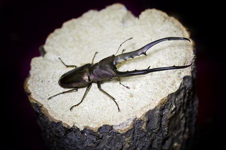 mandibles: beetle Stock Photo