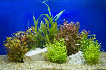 A green beautiful planted tropical freshwater aquarium Archivio Fotografico