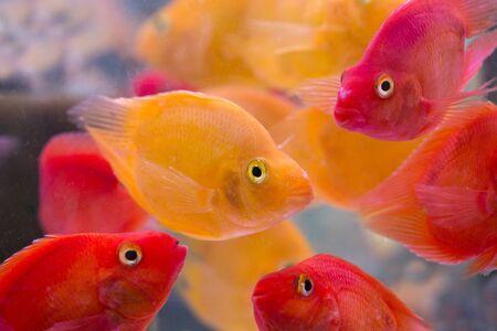 exoticism saltwater fish: Fish in aquarium