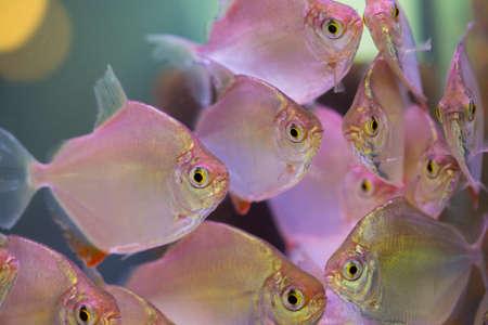 reeffish: Fish in aquarium