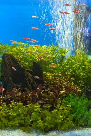 緑美しい植えられた熱帯淡水水族館 写真素材 - 37999894