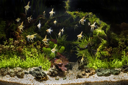 A green beautiful planted tropical freshwater aquarium Stok Fotoğraf