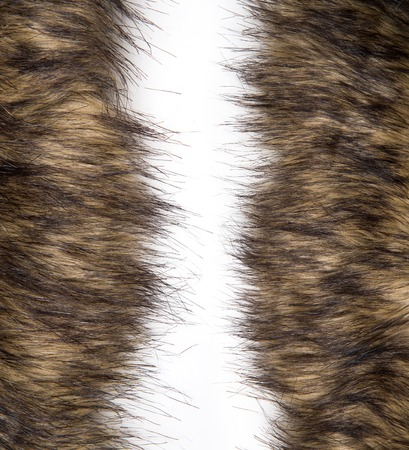 silver fox: fur texture background