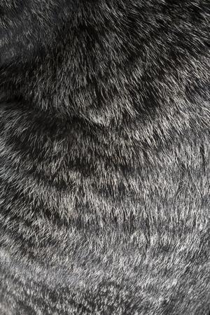 peltry: Cat fur texture