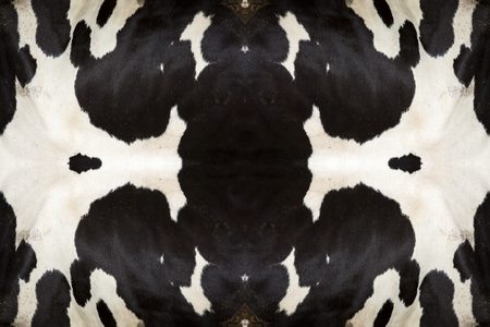 cow hide: real black and white cow hide