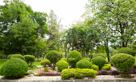 arboles frondosos: Green Lawn and Trees in a Park