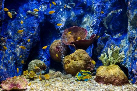 Aquarium fish with coral and aquatic animals