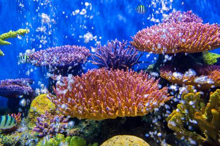 fish tank: Aquarium fish with coral and aquatic animals
