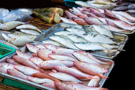 protien: Marine fish sold to the market. Stock Photo