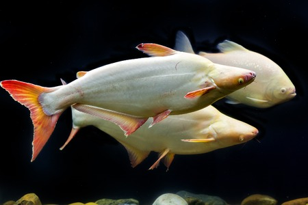 Tropical fish that iridescent shark Imagens