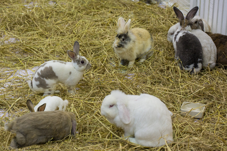 Rabbits in the cage