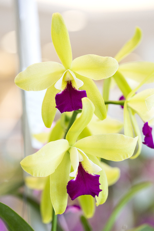 Beautiful orchid blossom in flower garden