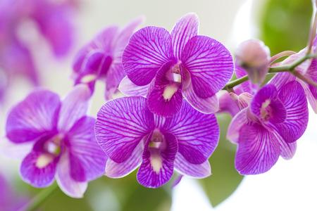 Purple orchid flowers in garden Stock Photo
