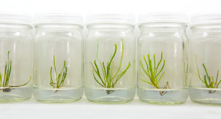 Tissue culture in the laboratory