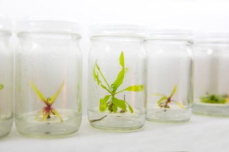 Tissue culture in the laboratory